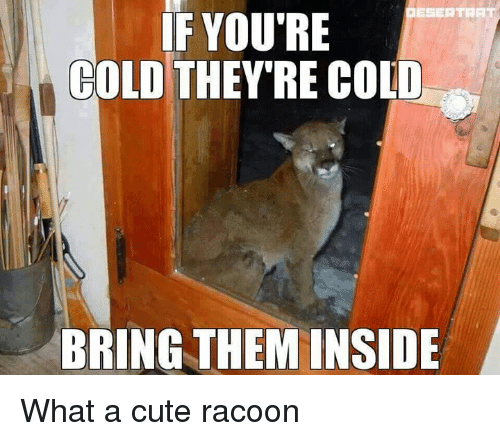 If Youre Cold Theyre Cold: ESERTBAT  IF YOU'RE  COLD  THEY'RE COLD  BRING THEM INSIDE What a cute racoon