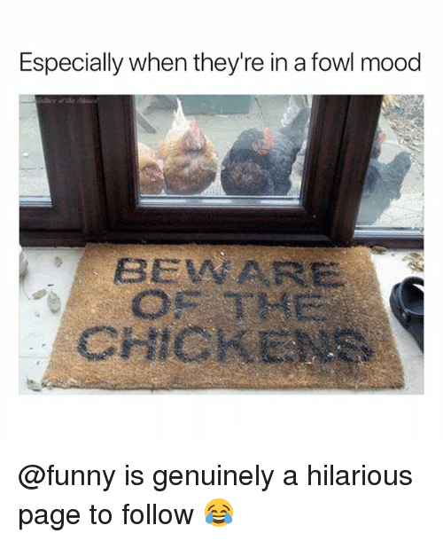 Fowl: Especially when they're in a fowl mood  BEVWARE  CHICKENE @funny is genuinely a hilarious page to follow 😂
