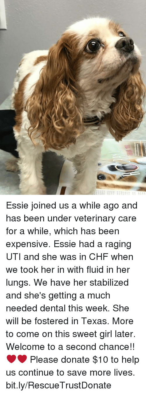 Memes, Girl, and Help: Essie joined us a while ago and has been under veterinary care for a while, which has been expensive. Essie had a raging UTI and she was in CHF when we took her in with fluid in her lungs. We have her stabilized and she's getting a much needed dental this week. She will be fostered in Texas. More to come on this sweet girl later. Welcome to a second chance!!❤❤ Please donate $10 to help us continue to save more lives. bit.ly/RescueTrustDonate