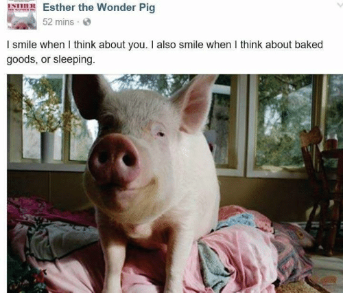 when i think about you: Esther the Wonder Pig  52 mins  l smile when I think about you. I also smile when think about baked  goods, or sleeping