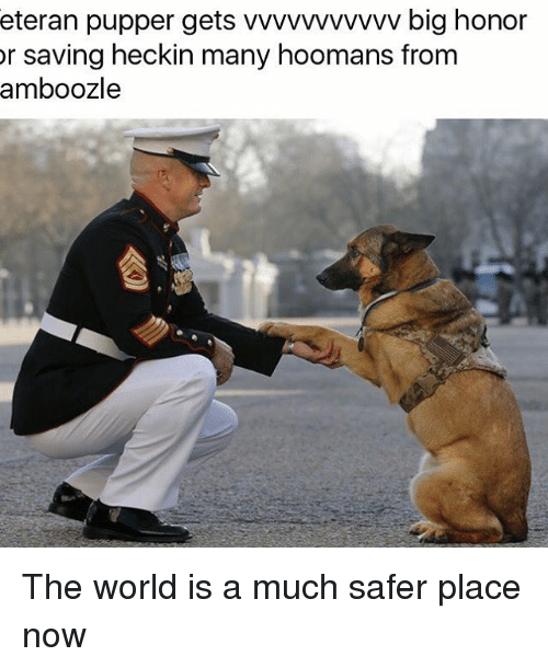 Memes, World, and 🤖: eteran pupper gets vvvvvvvvvvv big honor  or saving heckin many hoomans from  amboozle The world is a much safer place now