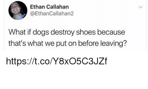 Dogs, Memes, and Shoes: Ethan Callahan  @EthanCallahan2  What if dogs destroy shoes because  that's what we put on before leaving? https://t.co/Y8xO5C3JZf