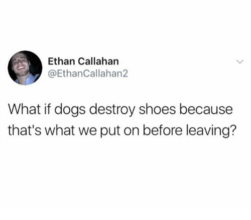Dogs, Shoes, and Destroyer: Ethan Callahan  @EthanCallahan2  What if dogs destroy shoes because  that's what we put on before leaving?