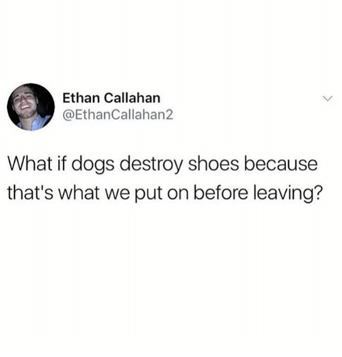 Dogs, Funny, and Shoes: Ethan Callahan  @EthanCallahan2  What if dogs destroy shoes because  that's what we put on before leaving?
