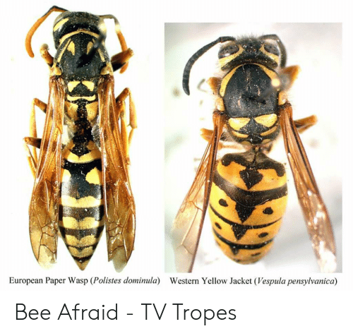 25+ Best Memes About Paper Wasp