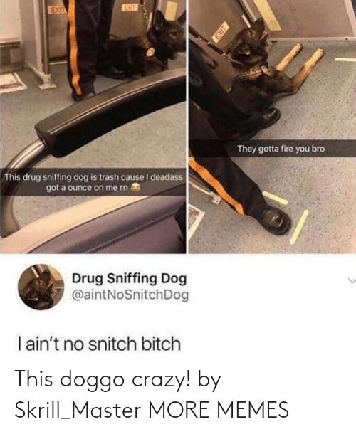 Exit: EUT  EXIT  They gotta fire you bro  This drug sniffing dog is trash cause I deadass  got a ounce on me rn  Drug Sniffing Dog  @aintNoSnitchDog  I ain't no snitch bitch This doggo crazy! by Skrill_Master MORE MEMES