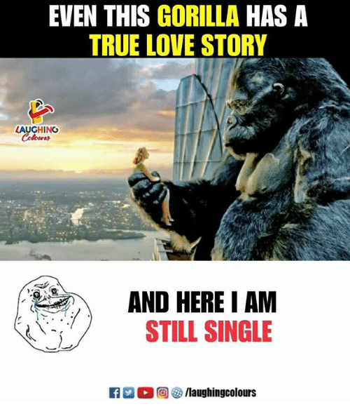 Love, True, and Indianpeoplefacebook: EVEN THIS GORILLA HAS A  TRUE LOVE STORY  LAUGHING  AND HERE I AM  STILL SINGLE