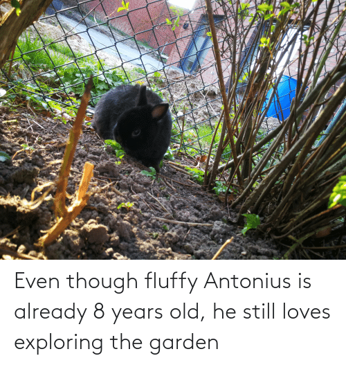 fluffy: Even though fluffy Antonius is already 8 years old, he still loves exploring the garden