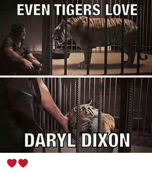 Love, Memes, and Tigers: EVEN TIGERS LOVE  DARYL DIXON ❤❤
