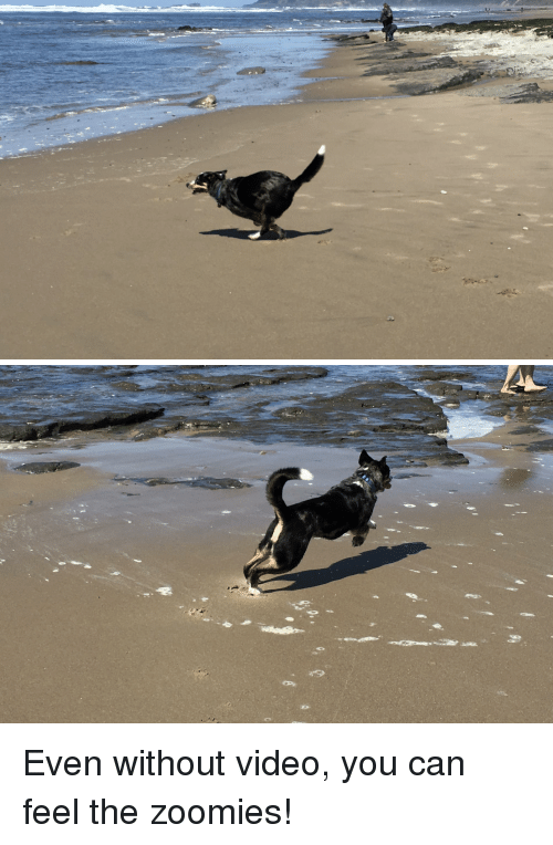 Zoomies: Even without video, you can feel the zoomies!