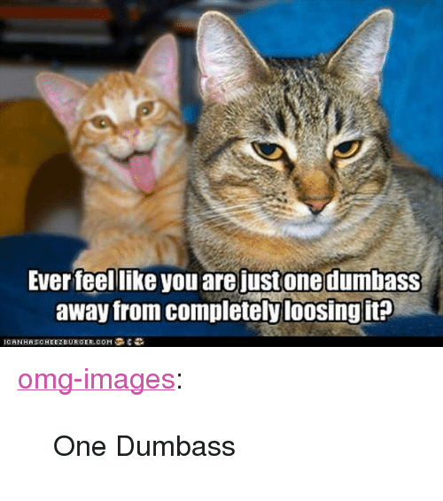 """loosing: Ever feel like you are justonedumbasS  away from completely loosing it <p><a href=""""https://omg-images.tumblr.com/post/170525919352/one-dumbass"""" class=""""tumblr_blog"""">omg-images</a>:</p>  <blockquote><p>One Dumbass</p></blockquote>"""