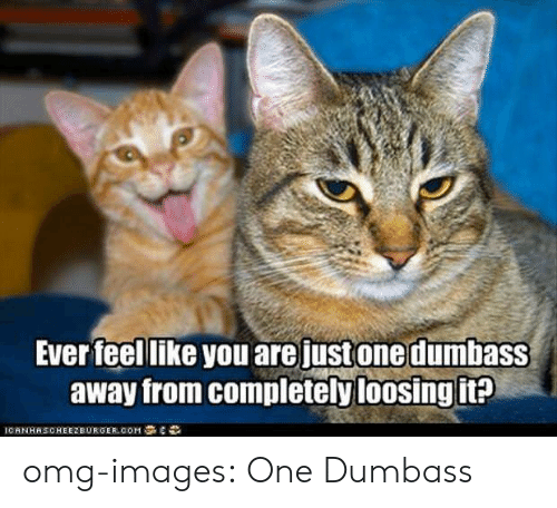 loosing: Ever feel like you are justonedumbasS  away from completely loosing it omg-images:  One Dumbass