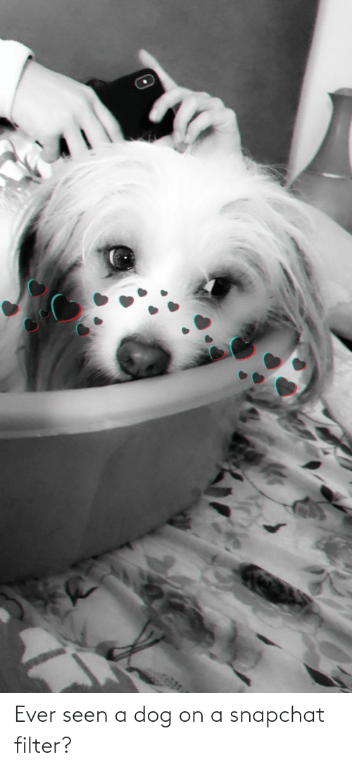 Snapchat Filter: Ever seen a dog on a snapchat filter?