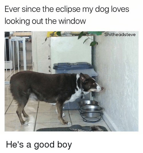 Looking Out The Window: Ever since the eclipse my dog loves  looking out the window  Shitheadsteve He's a good boy