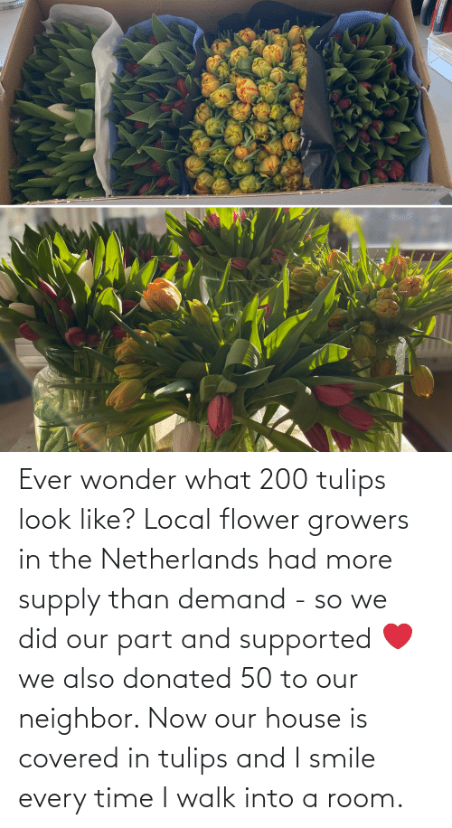 i smile: Ever wonder what 200 tulips look like? Local flower growers in the Netherlands had more supply than demand - so we did our part and supported ❤️ we also donated 50 to our neighbor. Now our house is covered in tulips and I smile every time I walk into a room.
