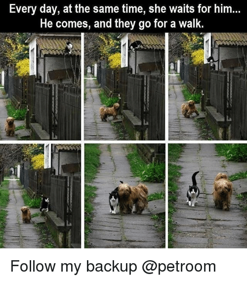 Funny, Time, and Him: Every day, at the same time, she waits for him...  He comes, and they go for a walk. Follow my backup @petroom