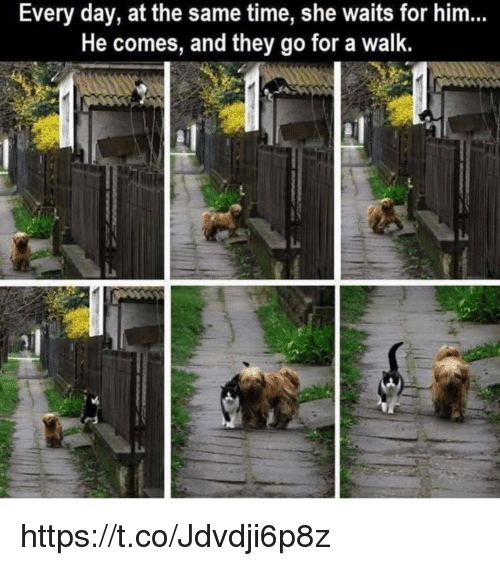 Memes, Time, and 🤖: Every day, at the same time, she waits for him..  He comes, and they go for a walk. https://t.co/Jdvdji6p8z