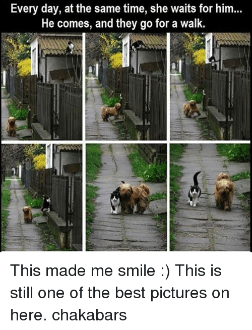 Best Pictures: Every day, at the same time, she waits for him...  He comes, and they go for a walk. This made me smile :) This is still one of the best pictures on here. chakabars