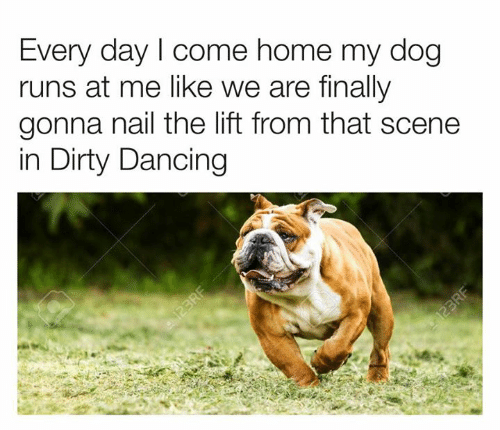 nail: Every day I come home my dog  runs at me like we are finally  gonna nail the lift from that scene  in Dirty Dancing  123RF  123RF