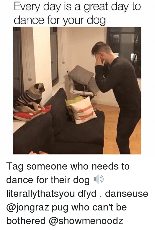 dog tags: Every day is a great day to  dance for your dog Tag someone who needs to dance for their dog 🔊 literallythatsyou dfyd . danseuse @jongraz pug who can't be bothered @showmenoodz