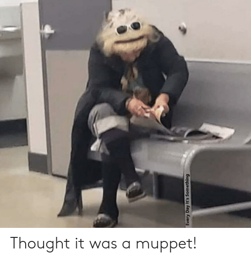 its something: Every Day It's Something Thought it was a muppet!