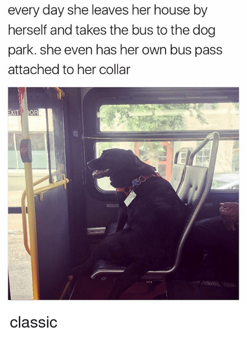 Memes, House, and 🤖: every day she leaves her house by  herself and takes the bus to the dog  park. She even has her own bus pass  attached to her collar  XIT XOR classic