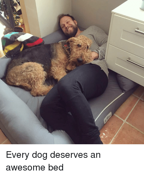 Every Dog Deserves an Awesome Bed