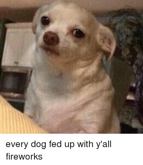 Fed To Dogs Video