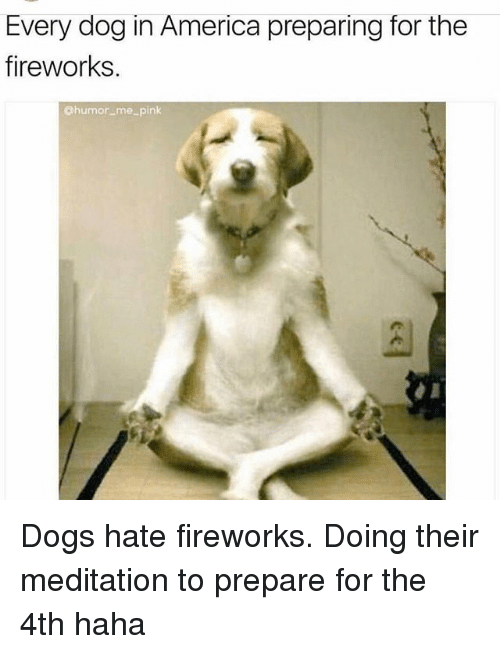 America, Dogs, and Memes: Every dog in America preparing for the  fireworks.  @humor_me_pink Dogs hate fireworks. Doing their meditation to prepare for the 4th haha