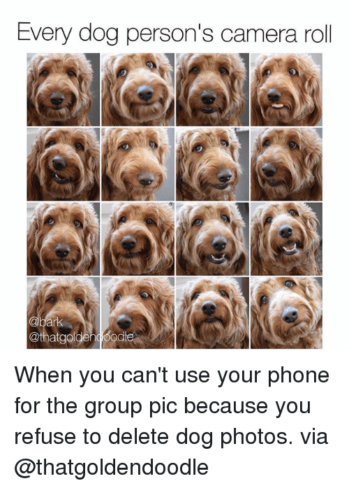 Memes, Phone, and Camera: Every dog person's camera roll  @thatgodenqood When you can't use your phone for the group pic because you refuse to delete dog photos. via @thatgoldendoodle
