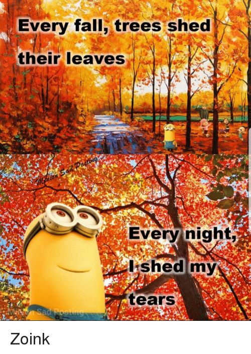 zoink: Every fall, trees shed  their leaves  Every night  shed my  tears