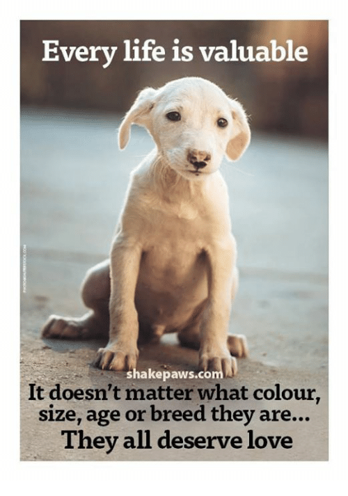 Memes, 🤖, and Matter: Every life is valuable  It doesn't paws.co  colour  matter what size, age or breed they are...  They all deserve love
