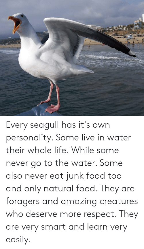 junk: Every seagull has it's own personality. Some live in water their whole life. While some never go to the water. Some also never eat junk food too and only natural food. They are foragers and amazing creatures who deserve more respect. They are very smart and learn very easily.