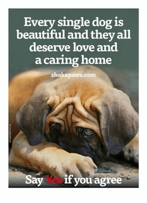 Beautiful, Love, and Memes: Every single dog is  beautiful and they all  deserve love and  a caring home  shake paws com  Say  if you agree