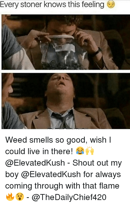 Memes, Weed, and Good: Every stoner knows this feeling Weed smells so good, wish I could live in there! 😂🙌 @ElevatedKush - Shout out my boy @ElevatedKush for always coming through with that flame 🔥😵 - @TheDailyChief420