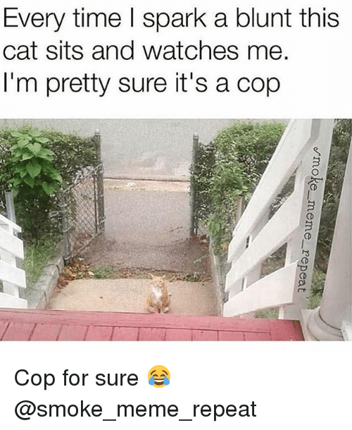Meme, Weed, and Marijuana: Every time l spark a blunt this  cat sits and watches me  I'm pretty sure it's a cop Cop for sure 😂 @smoke_meme_repeat