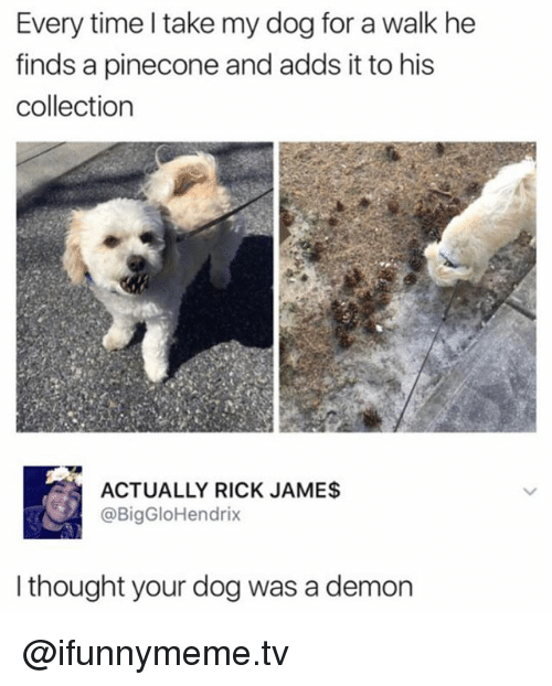 Funny, Time, and Thought: Every time l take my dog for a walk he  finds a pinecone and adds it to his  collection  ACTUALLY RICK JAME$  @BigGloHendrix  I thought your dog was a demon @ifunnymeme.tv