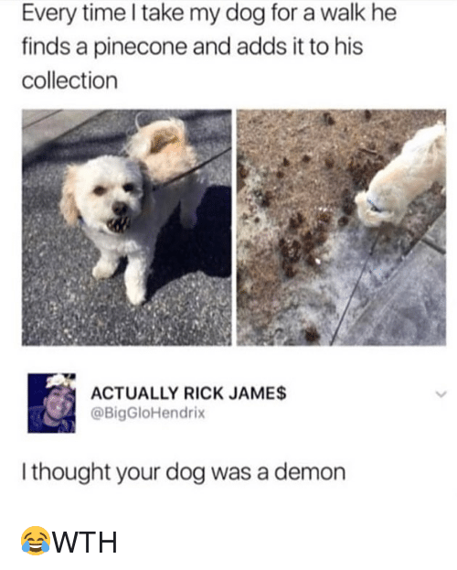 Memes, Time, and Thought: Every time l take my dog for a walk he  finds a pinecone and adds it to his  collection  ACTUALLY RICK JAMES  @BigGloHendrix  I thought your dog was a demon 😂WTH