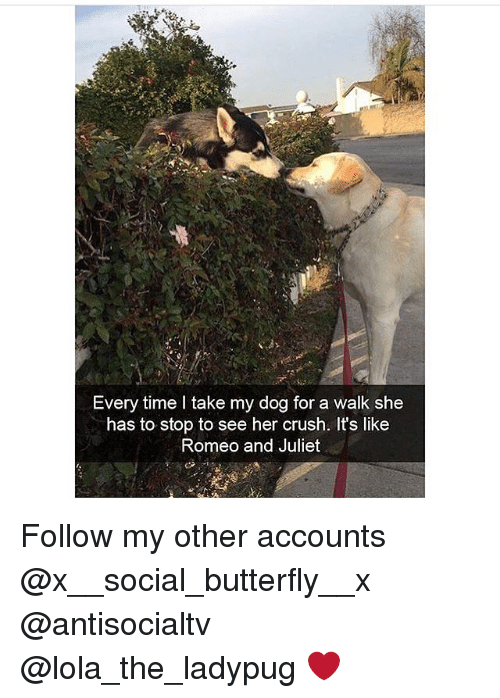 Crush, Memes, and Butterfly: Every time l take my dog for a walk she  has to stop to see her crush. It's like  Romeo and Juliet Follow my other accounts @x__social_butterfly__x @antisocialtv @lola_the_ladypug ❤️