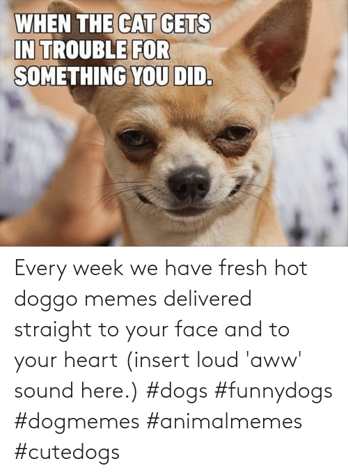 loud: Every week we have fresh hot doggo memes delivered straight to your face and to your heart (insert loud 'aww' sound here.) #dogs #funnydogs #dogmemes #animalmemes #cutedogs