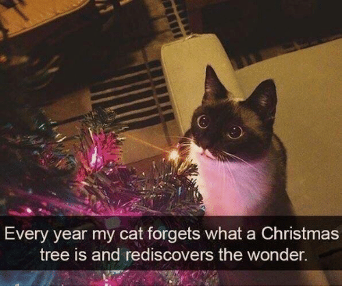 Christmas, Christmas Tree, and Tree: Every year my cat forgets what a Christmas  tree is and rediscovers the wonder.