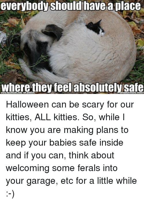 Halloween, Kitties, and Memes: everybody Should have a place  where they feel absolutely safe Halloween can be scary for our kitties, ALL kitties. So, while I know you are making plans to keep your babies safe inside and if you can, think about welcoming some ferals into your garage, etc for a little while :-)