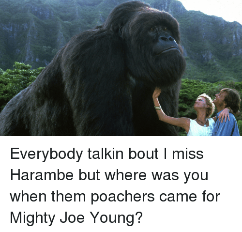 25 best memes about harambe tumblr and meme harambe tumblr