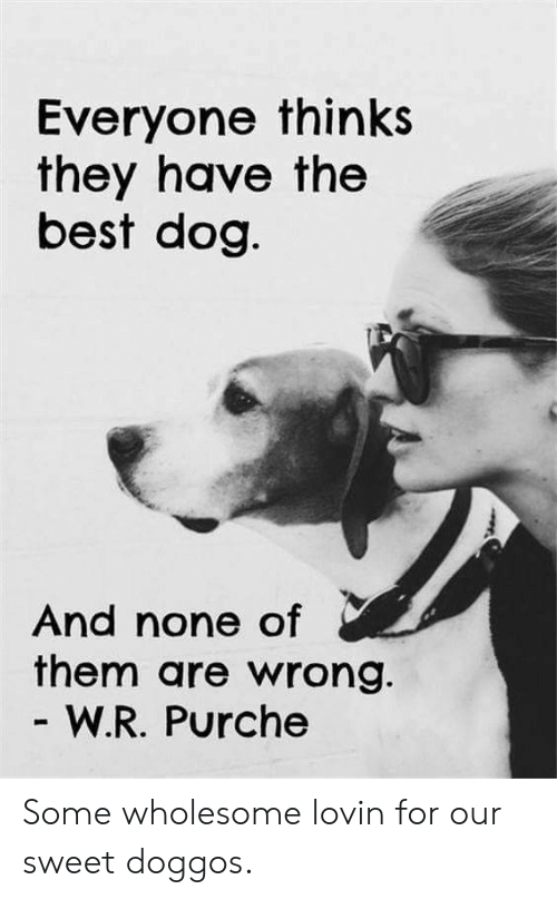 Best Dog: Everyone thinks  they have the  best dog  And none of  them are wrong.  W.R. Purche Some wholesome lovin for our sweet doggos.