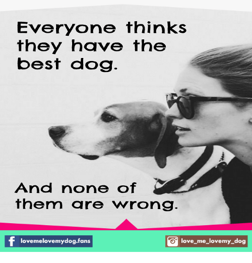 love my dogs: Everyone thinks  they have the  best dog  And none of  them are wrong  love melovemydog.fans  S love me love my dog