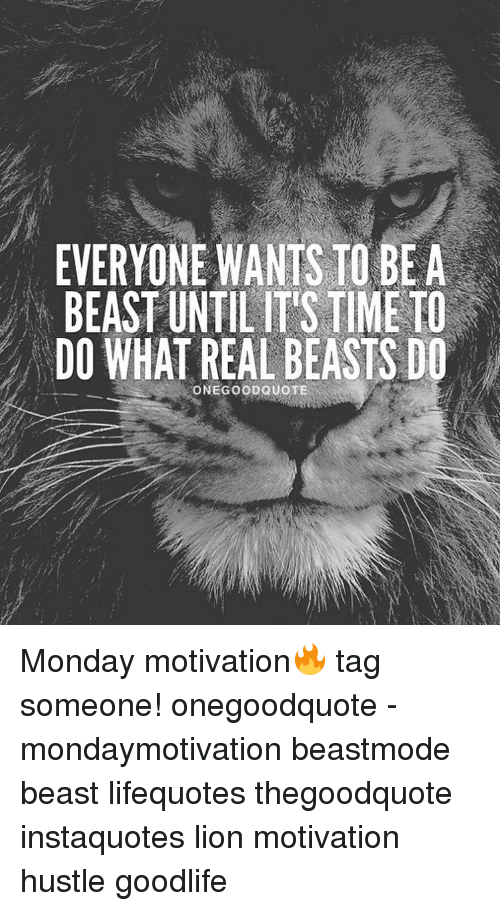 Tess Lion Motivational Quotes From Cats 5 Life Is Not About