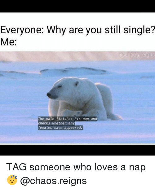 Gym, Tag Someone, and Single: Everyone: Why are you still single?  Me:  @chaos reigns  The male finishes his nap and  checks whether any  females have appeared. TAG someone who loves a nap 😴 @chaos.reigns