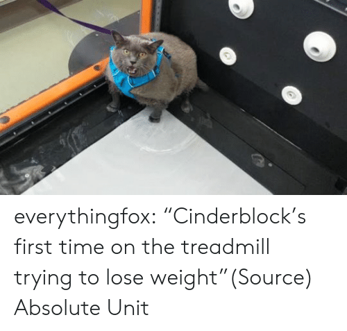 """Treadmill: everythingfox:  """"Cinderblock's first time on the treadmill trying to lose weight""""(Source)  Absolute Unit"""
