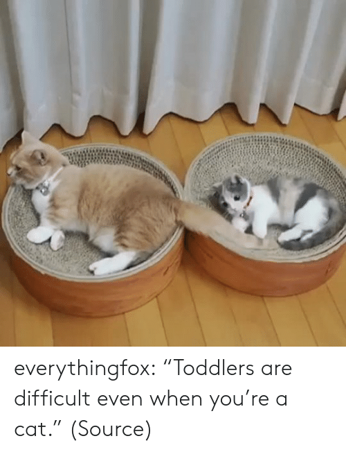 """Toddlers: everythingfox: """"Toddlers are difficult even when you're a cat."""" (Source)"""