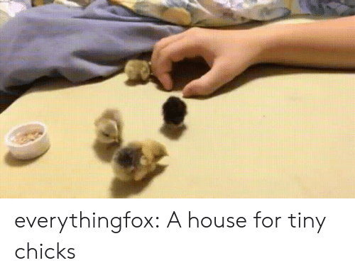 chicks: everythingfox: A house for tiny chicks